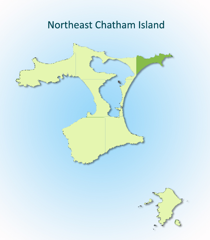 Northeast Chatham Island