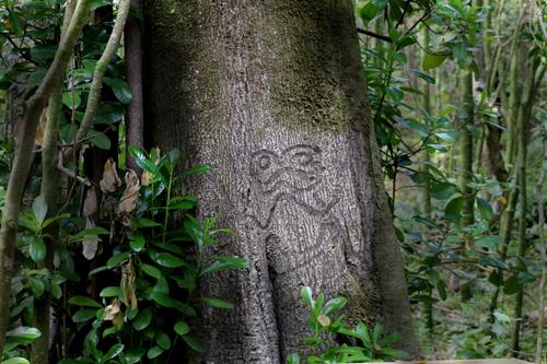 Rakau Momori Tree Carvings